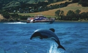Akaroa Harbour Cruise - (2 people)