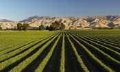 Half Day Marlborough Wine Tour (2 ppl)