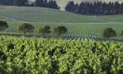 Waipara Wine Trail  2ppl