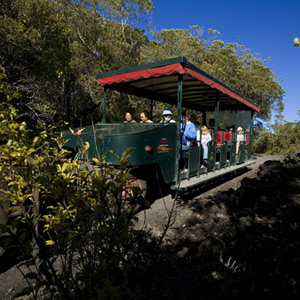 Rangitoto Is & Volcanic Exp (2 people)